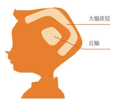 <a href=http://www.jingsi.org.cn/class/electrical.htm target=_blank class=infotextkey>脑电生物反馈</a>训练.jpg